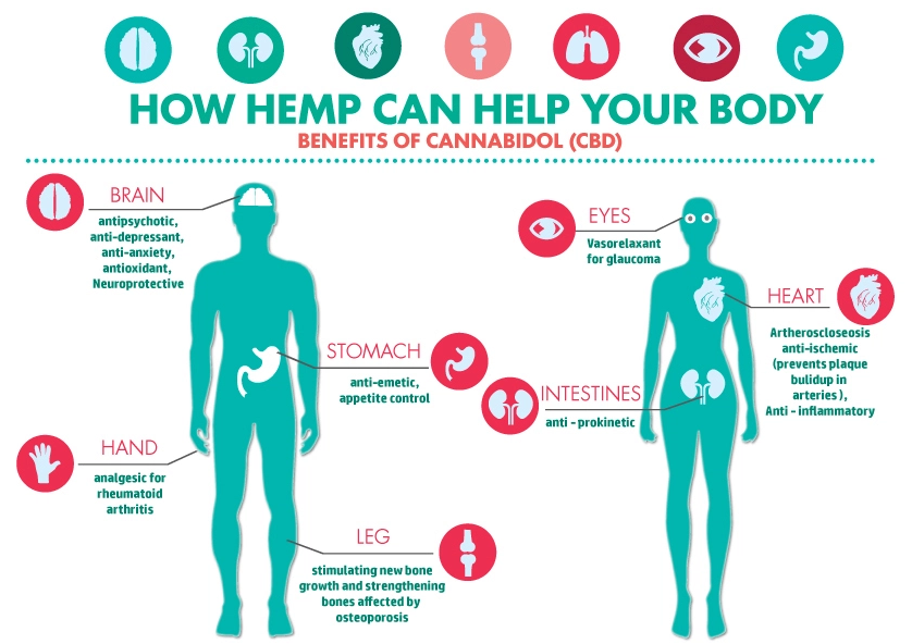 The Endocannabinoid System 101: Why CBD matters in our body