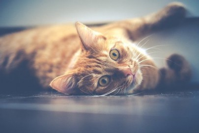 CBD for Anxious Cats: Is CBD Oil Good for Your Cat?